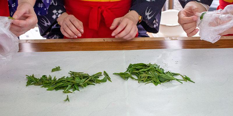 家庭で手作り茶を作る方法も教えていただきました
