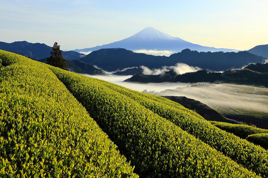 2020年後半のお茶業界の動向・課題は? – 日小田知彦氏(エコバイ株式会社 代表)|1899 CHACHACHA BLOG