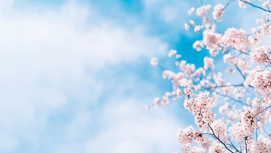"""""""それでも""""春はやってきた! やさしい陽ざしとの対話より。  1899 CHACHACHA BLOG"""