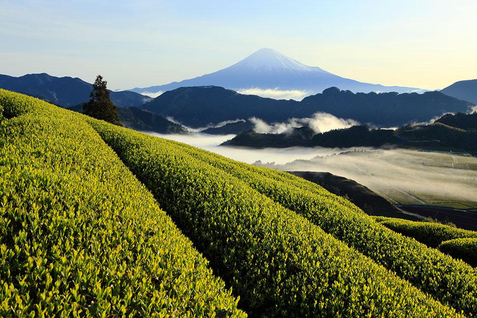 2021年のお茶業界動向、良いお茶の選び方とは – 竹内ひさ代氏(1) 1899 CHACHACHA BLOG